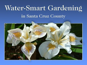 water-smart gardening screen with irises