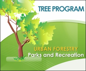 Welcome to the City of Santa Cruz Urban Forestry Page