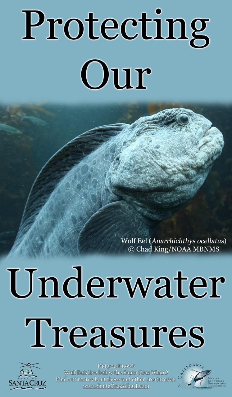dd4c8f066 Underwater Treasures