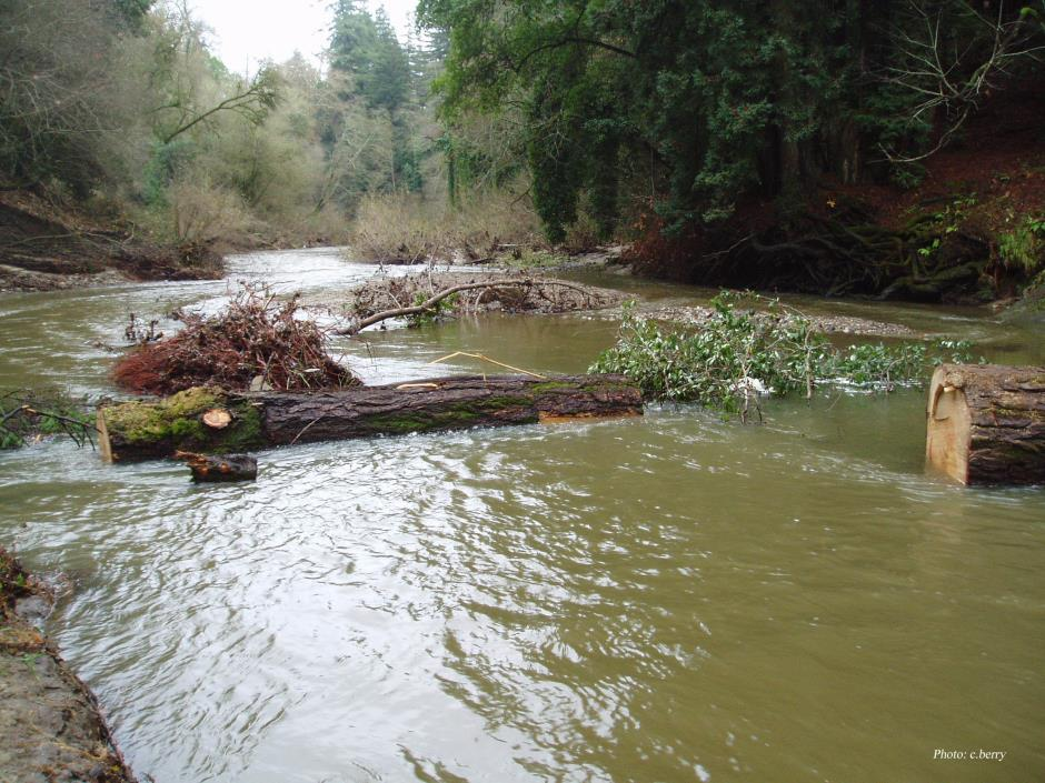 san lorenzo logjam removal 2003 low res