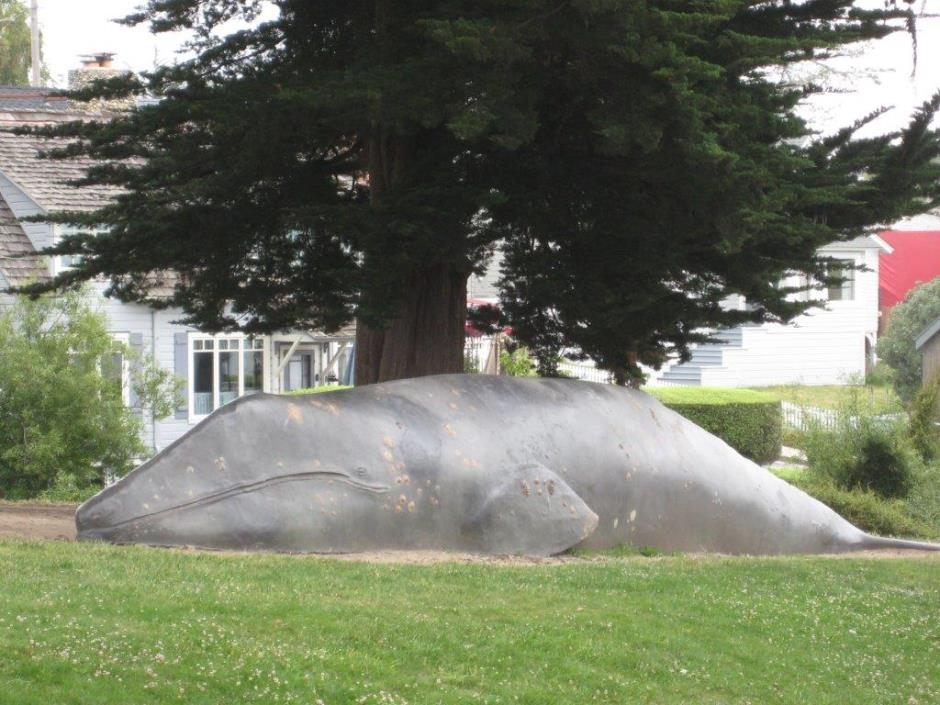 Whale at Tyrrell Park 007