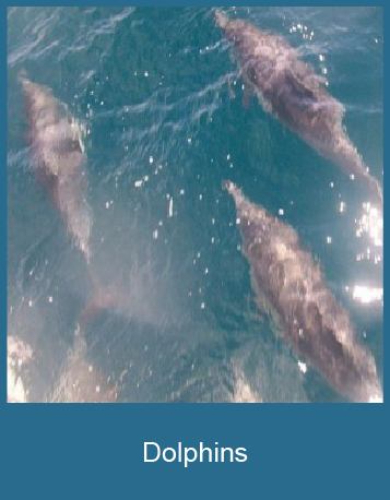 Dolphins-01